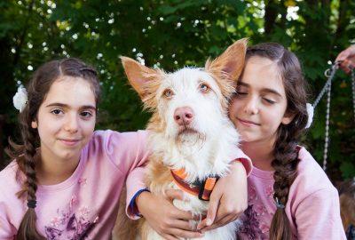 Tierhilfe Menorca e.V. Hundefest 2017
